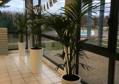 Décoration végétale - Parc Expo Piscines Waterair