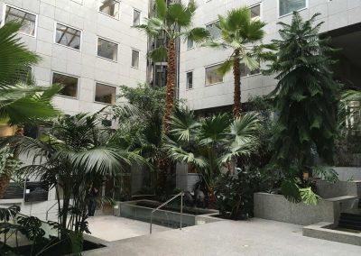 Remise en état d'un jardin tropical et entretien annuel - Lyon 6